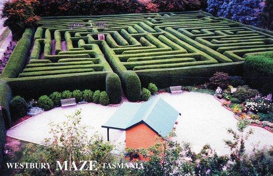 Westbury Maze & Cafe
