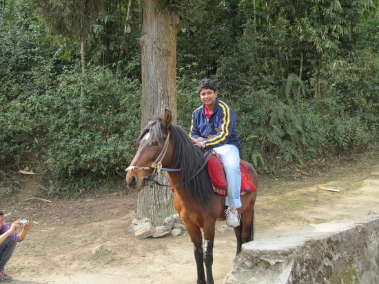 The Ivanhoe House: My son in horse back