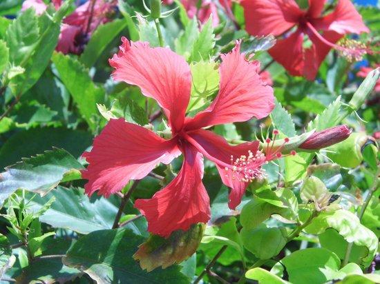 Ananda Beach Hotel: Flowers, flowers, flowers.....