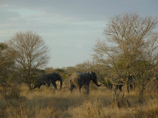 Baobab Ridge: One of the Big Five