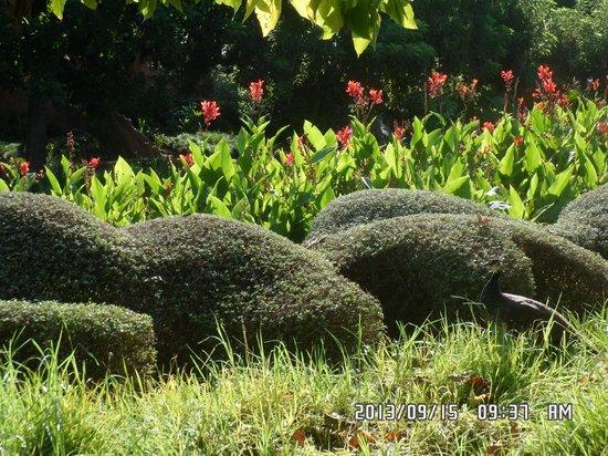 Hotel San Fermin: Le parc de la paloma..Bénalmadéna