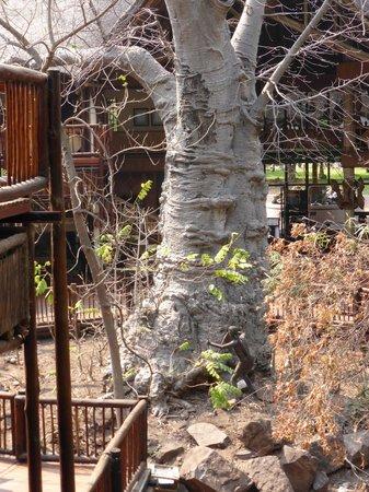 Cresta Mowana Safari Resort and Spa: Hinter der Rezeption