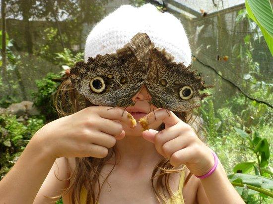 Cabañas Bird Planet: Butterfly refuge 3 miles away