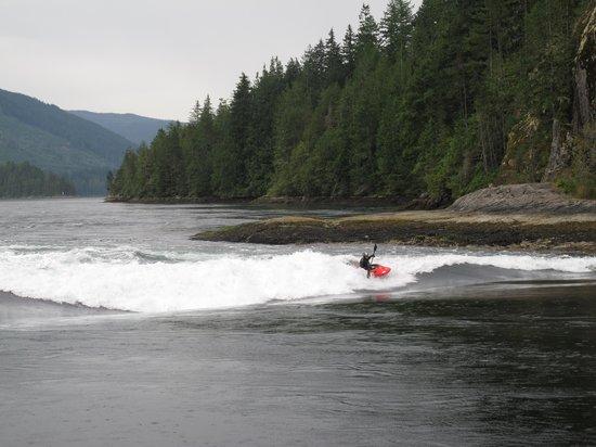 Sunshine Coast Tours: Kayaker