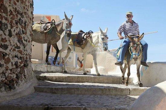 Taverna Katina: donkeys on way down to the port