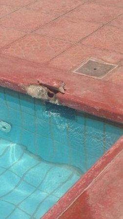 Lantiana Napa Aparthotel: tiles around the pool