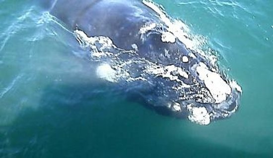 Ivanhoe Sea Safaris: another whale who paid us a visit