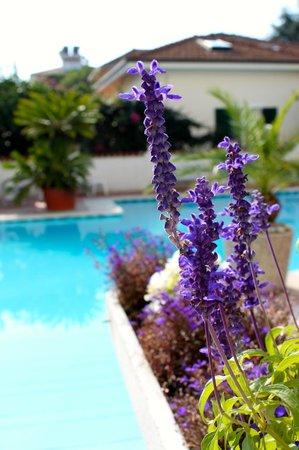 Hotel Splendid : Fiori & Pischina