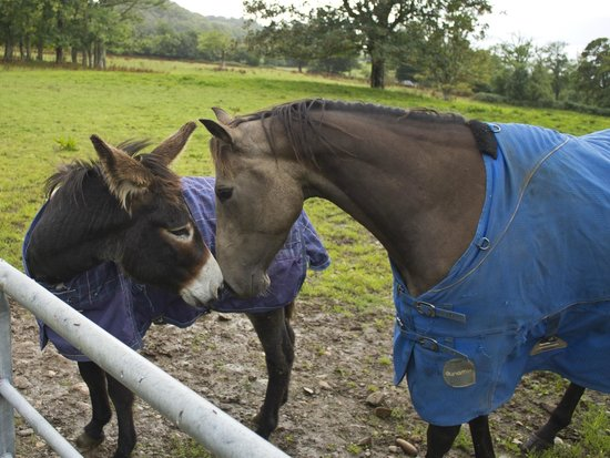 Lunga Riding Stables: Best of friends at the stables