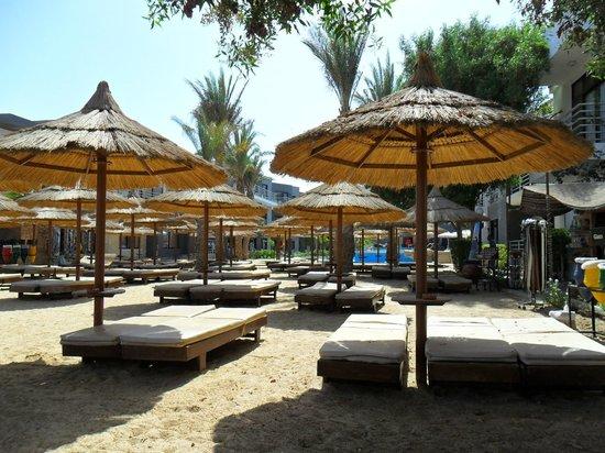 Premium Beach Resort: Strand