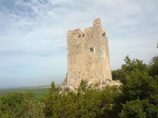 Alberese, Italia: Torre