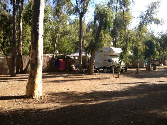 Camping Lacona : Campeggio Lacona