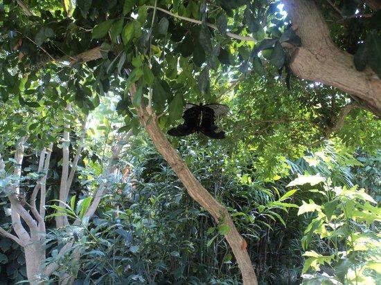 Le Tropique du Papillon: tropique du papillon