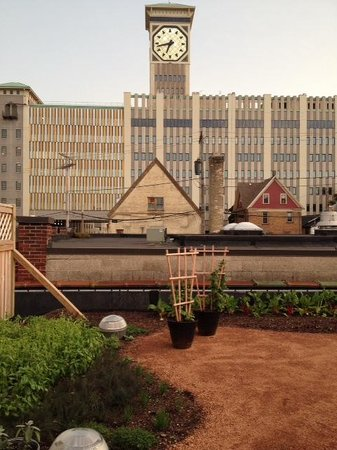 Braise: Rooftop garden