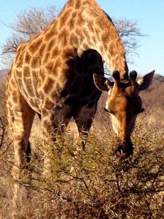 Tau Game Lodge : safari