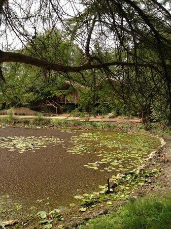 Wildebeest Eco Camp: le jardin