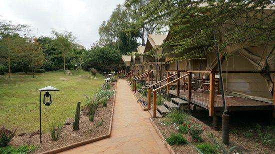 Wildebeest Eco Camp: vue des tentes