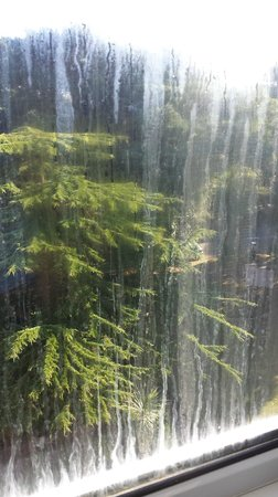 Best Western Hotel Royale: The Filthy Window