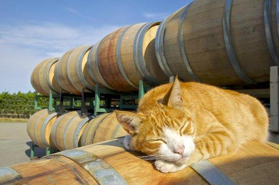 The Inn At Abeja : Cat Nap