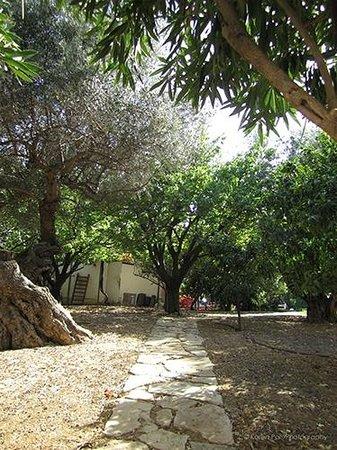 Althea Village SuneoClub: Althea Village Fruit Trees