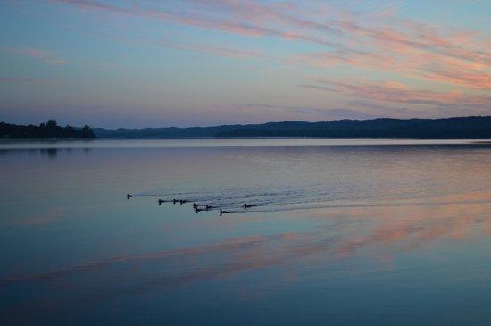 Lake Leelanau R.V. Park: Ducks