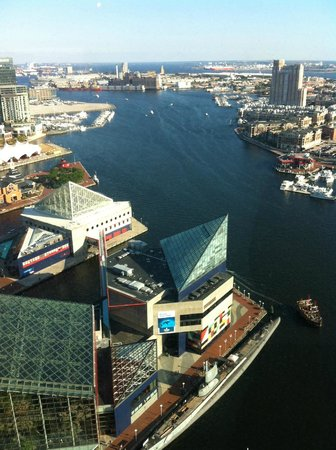 Top of the World Observation Level: Aquarium and inner harbor