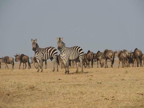 Loyk Mara Luxury Camp: Migration