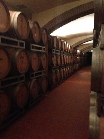 Capannelle Wine Resort: the cellar