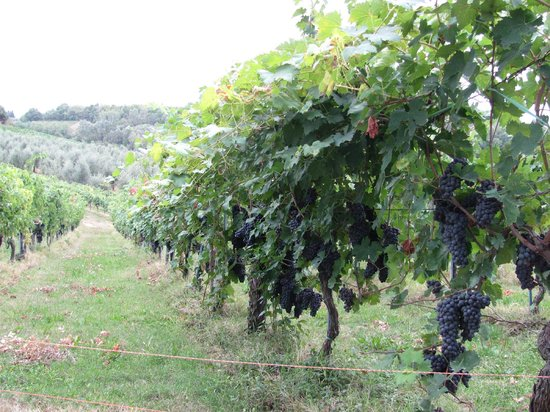 Farm House La Moraia: Tempted to Pick!