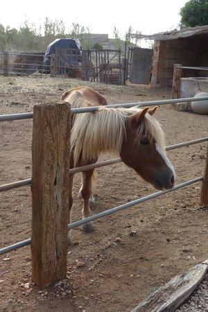 Agroturismo Finca Sant Blai: Paardje