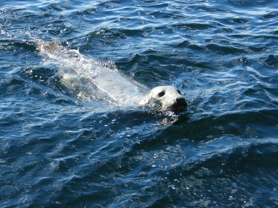 Gairloch Marine Life Centre & Cruises : Following - and hoping for a treat!