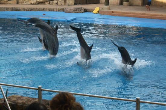 Breakers Resort : You must go to uShaka Marine world!