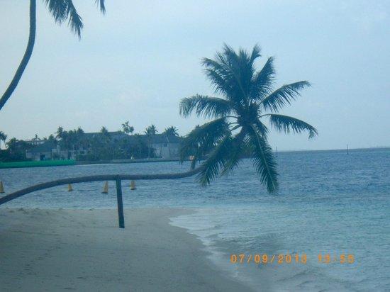 Palm foto van conrad maldives rangali island rangali for Conrad maldives rangali
