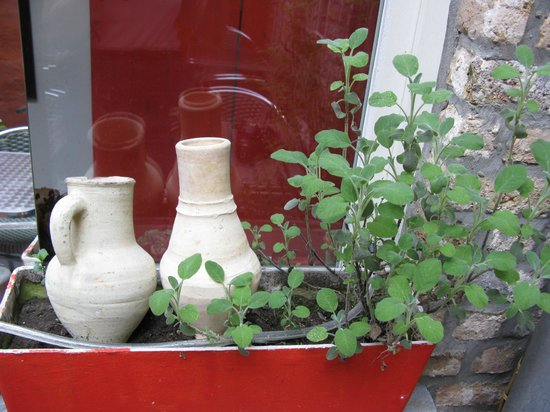 Passion For Food : Herbs growing right there- in own mini garden