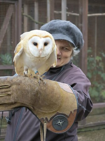 Stockley Farm Birds of Prey Centre: Lively young barn owl!!!
