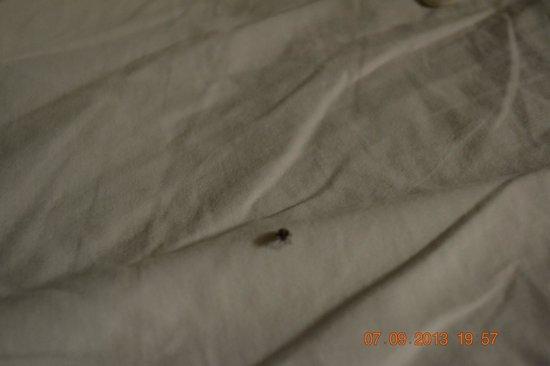 Fairfield Inn Anaheim Resort: Bed Bugs Disneyland