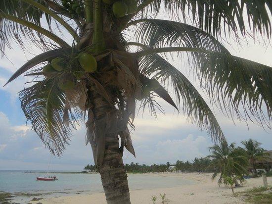 Paamul Hotel: la spiaggia