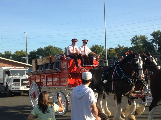 The Big E: Halloran wagon with Clydesdale horses