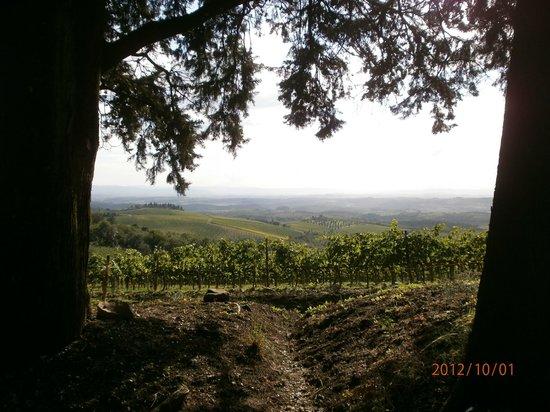Le Monde: Recordando la bella Toscana, Italia...