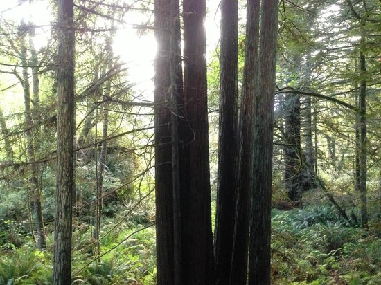 The Redwoods RV Resort: View from the front porch