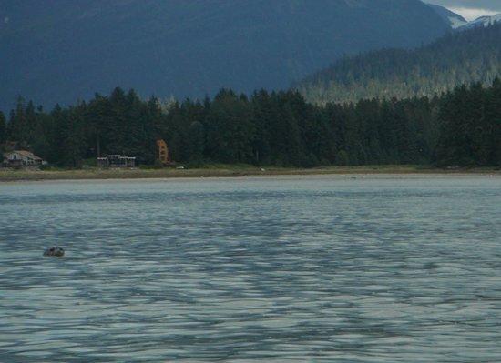 Alaska Travel Adventures: Curious harbor seal