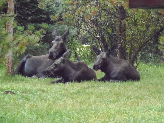 Elk Creek Campground and RV Park: The moose are so comfortable here