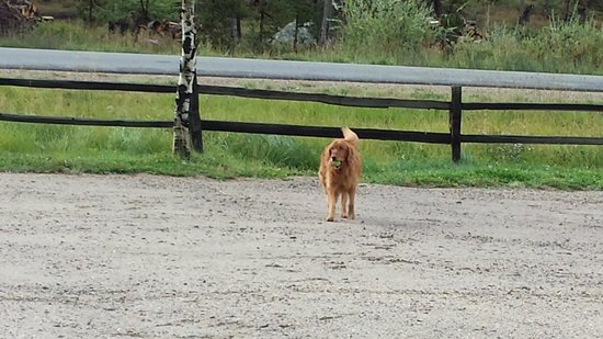 Elk Creek Campground and RV Park: Beauiful golden retriever playing catch