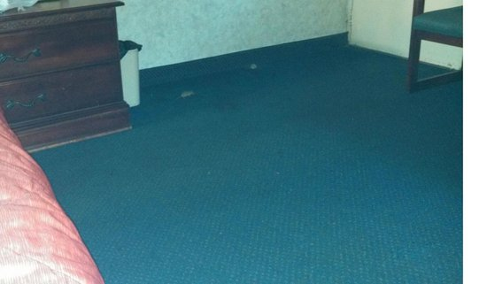 Ramada Limited Cockeysville: Rodent running around