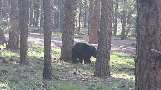 Bearizona Wildlife Park: ride through