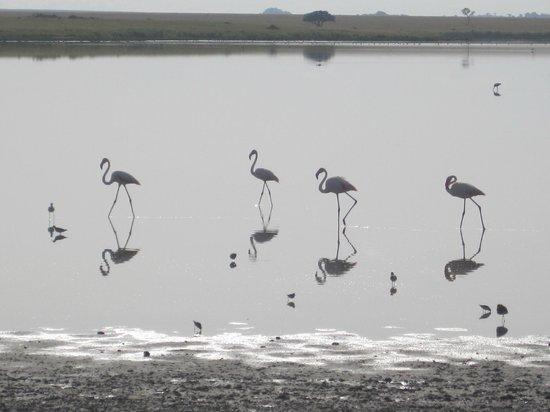Wayo Africa: Peaceful....pink flamingos in the Serengeti.