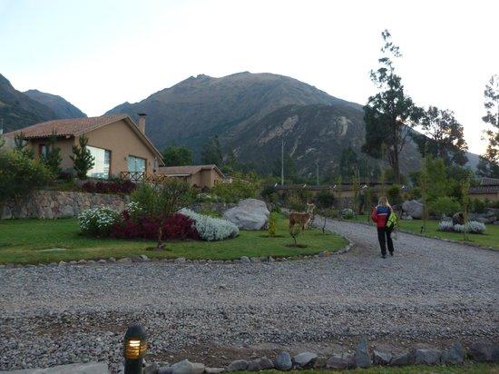 Casa Andina Premium Valle Sagrado: vista de alrededores de la cabaña
