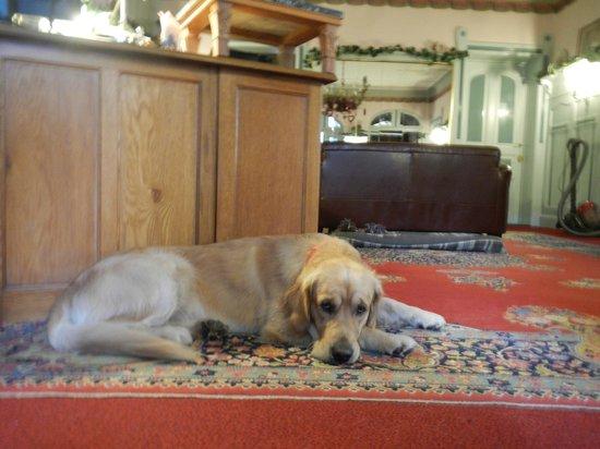 Hotel-Garni Hornburg : Dog Buddy