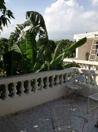Hibiscus Guest House : Fabulous patio on second floor with lots of shade