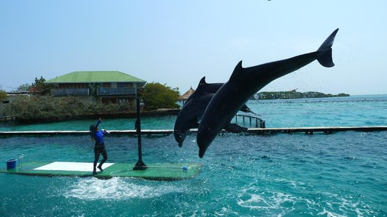 Tours in Rosario islands: Acuario- Delfinario